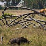 7 Days 6 Nights Taste of Northern Tanzania Safari