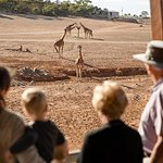 Monarto Safari Park General Admission Ticket