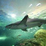 Keine Warteschlangen: Ripley's Aquarium of Canada in Toronto