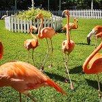 Hopp over linjen: Ardastra Gardens, Zoo & Conservation Center Admission Ticket