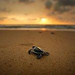 03 Days Beach Holidays in Srilanka