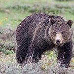 Half Day Grand Teton Wildlife Safari Tour
