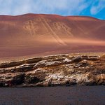 Full Day Paracas from Lima - Group tour