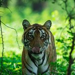 Indian nationals: Ranthambore wildlife safari online booking W/ Optional Trips