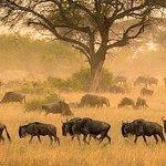 3 days serengeti & ngorongoro lodge tour