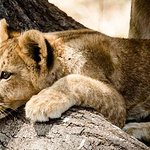 4 Días de Selous Safari