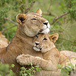 Day Trip for Wildlife Safari from Addis Ababa