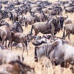 4-Day Masai Mara - Private luxury safari