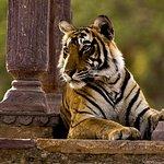 過夜到Ranthambore NP(Sawai Madhopur)從齋浦爾到Agra Drop