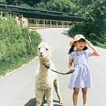 Grass Mud Horse Park + Soba Noodle Experience Hall + Trineo al aire libre