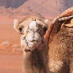 Sunset Excursion | Wadi Rum Desert