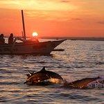 Tour privado 2 días una noche Ver delfines-otros varios hermosos objetos turísticos