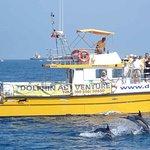 海豚在直布罗陀观看游览