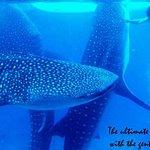 鲸鲨游泳体验和阿基尼德瀑布(从宿雾出发)