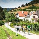 Wachau Valley Wine Tasting Bike Tour from Vienna