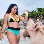 Famous Swimming Pigs Tour Bahamas - Full Day Powerboat to Exuma from Nassau