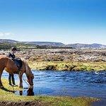 Icelandic Horseback Riding Tour from Reykjavik