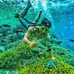 East Java Exotic Day Tour: Menjangan & Tabuhan Island Open Trip from Banyuwangi