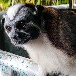 Excursion d'une journée à l'île aux Singes et dans un village indien au départ de la ville de Panama, Panama