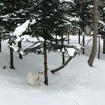 Niseko Snowshoe Tours照片