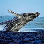 Samana Bus Tour d'observation des baleines