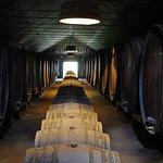 Lisbon Wine Tasting Private Tour in the Setubal Region