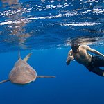 Snorkeling or Swimming with Sharks in Cabo San Lucas