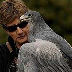Skip the Line: International Centre for Birds of Prey Entrance Ticket