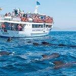 鯨魚和海豚之旅