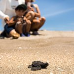 The Turtle Sanctuary Experience from Mazatlan