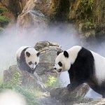 Billet d'entrée pour le ZooParc de Beauval