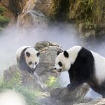 Skip the Line: ZooParc de Beauval Entrance Ticket