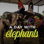 Un día en la granja de elefantes, Jaipur