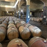 Wine Tour, 4 Vineyards + Lunch (All Inclusive)