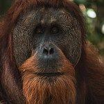 2 Day ECO Jungle Trek into the Gunung Leuser National Park