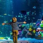 AquaDom & SEA LIFE 베를린 입장권