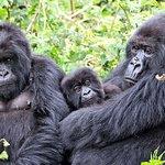 3 días de experiencia en el gorila del parque forestal impenetrable de Bwindi