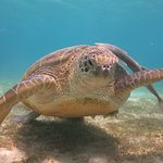 Scuba dive with turtles and corals watching!