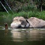 Una mañana con los elefantes en el santuario de elefantes de Phuket