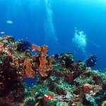 Exceptional diving in Bali