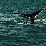 Charleston Off Shore Fishing Charter