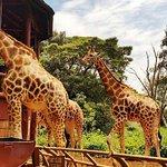 David Sheldrick, Giraffe Centre and Bomas of Kenya Full-Day Tour from Nairobi