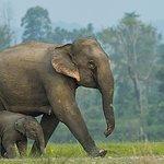 大象世界北碧(Kanchanaburi)與曼谷的私人接送服務