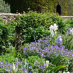 The gardens at the National Trust's Chalfield Manor. Challenging in a wheelchair but worth the effort.