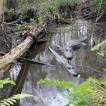 Ganztägiges Kajak-Abenteuer in den Everglades