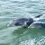 私人历史野生动物和海豚游轮南帕德里岛