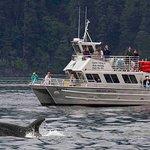 奥卡斯岛观鲸