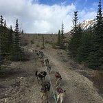 雪橇犬冒险和育空地区的黄金潘