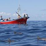 Hval og Dolphin Watching på Kanariøyene