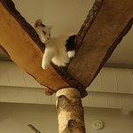 Photo of Cat Cafe Helkatti